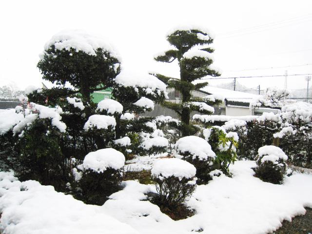 2021年 元旦の雪