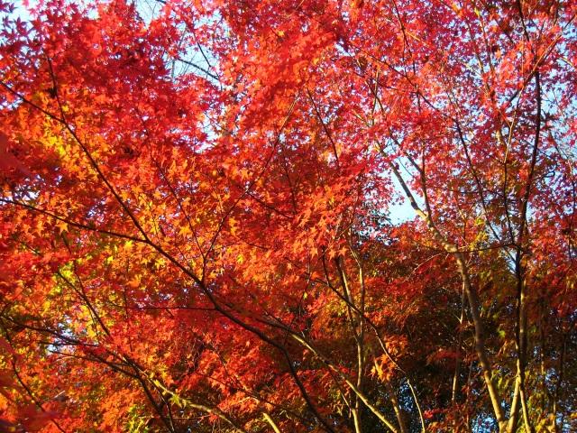 百年公園の紅葉